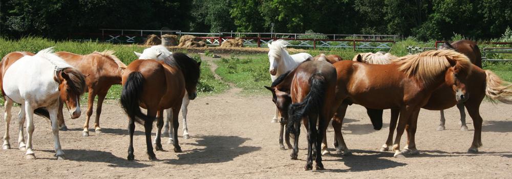 Kohala hobused